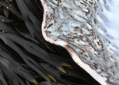 Detail with seaweed